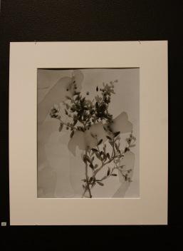 2-photograms