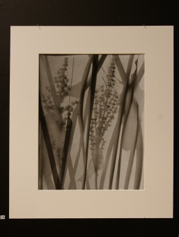 3-photograms