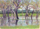 dancing-eucalypt-trees