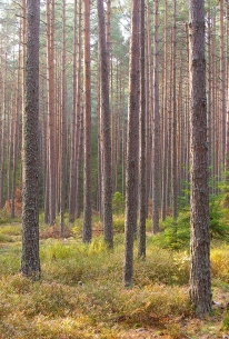 warm-evening-in-south-bohemian-forest