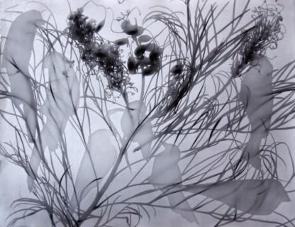 birds-in-the-bush4