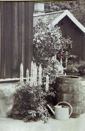 grandmothers-garden