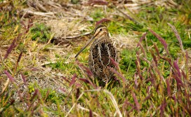 hiding-in-the-grass