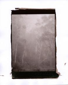misty-trees