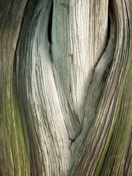 mlund-colour-stem2