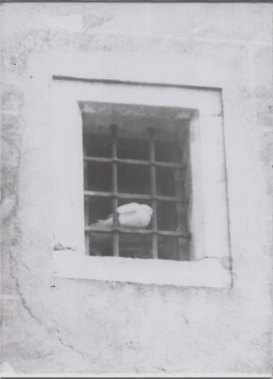 window-with-dove