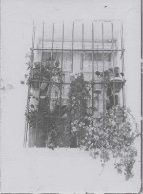 window-with-flowers