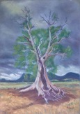 Cazneaux Tree Flinders Ranges